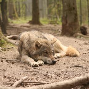 Не нужно «доминировать» над собакой, или как мызаблуждались
