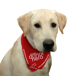 Blood_Donor_Dog_in_Bandana_sized