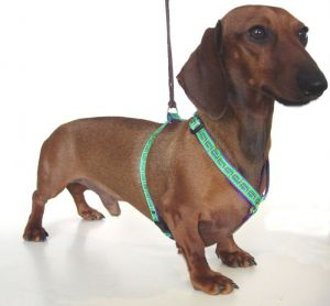 From: http://dachshundtreasures.com;