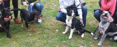 Эти собаки - родные братья и сестры из одного помета. Photo: http://www.wisdompanel.co.uk