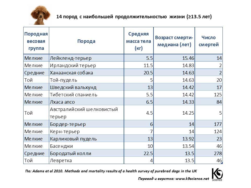 продолжительность жизни разных пород собак