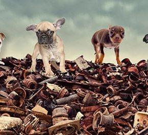 Купите ли вы щенка ценой смерти многихдругих?