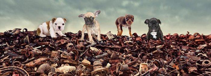 Щенки сравниваются с металлоломом, так как ими торгуют, не заботясь об их благополучии. Photo: RSPCA, UK
