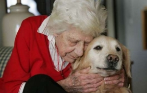 dog_elderly