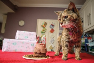 aging embed cat