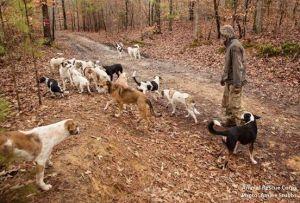 Источник - Animal Rescue Corps (Facebook)