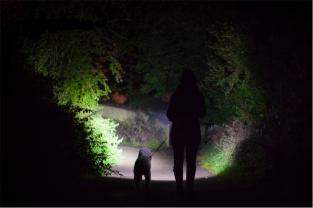 dogwalking-torch