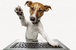 dog-computer-keyboard-640x426