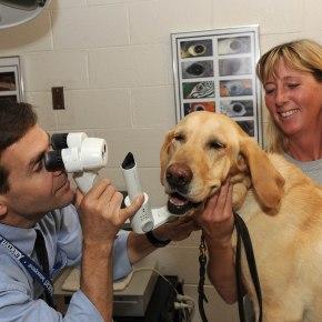 Взаимодействие с владельцем во время ветеринарных процедур может успокоитьсобаку